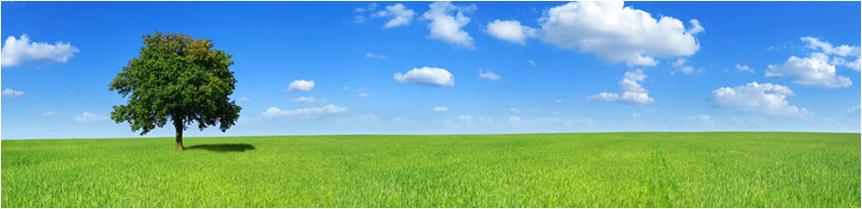 prado verde con árbol
